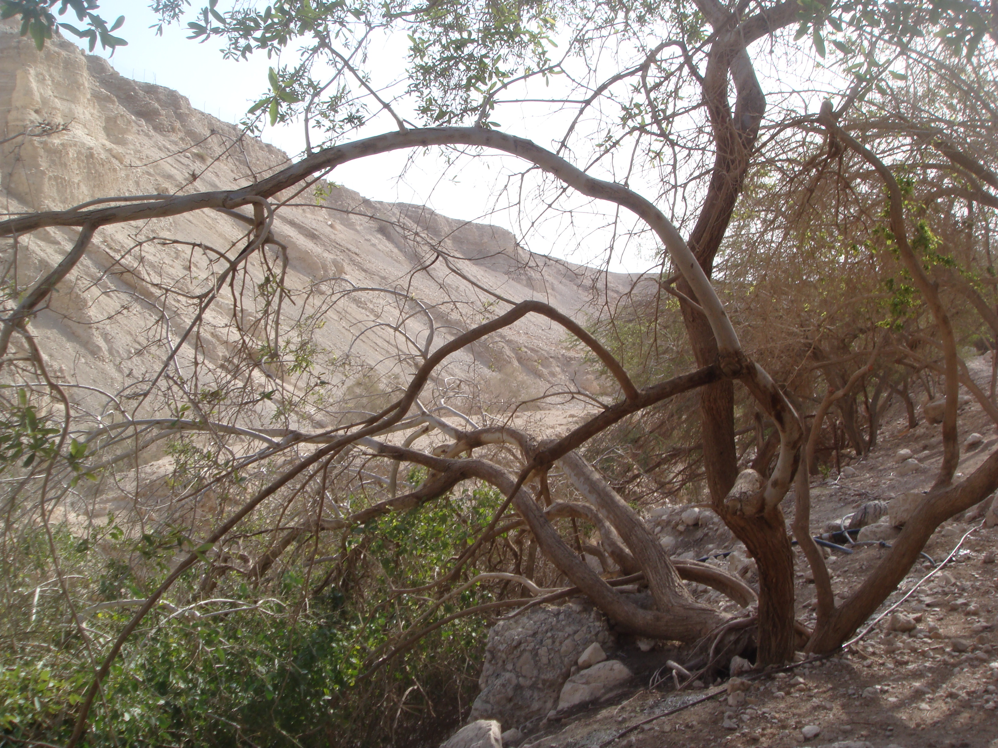 FLOURISHING IN DROUGHT, PART 1: THE SECRET OF THE TREE