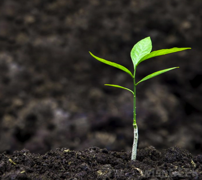 FLOURISHING IN DROUGHT, PART 2: THE IMPORTANCE OF GOOD SOIL