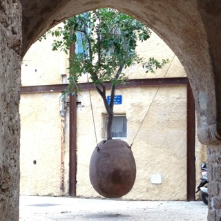 "A TREE GROWS IN JAFFA: are you (spiritually) a ""potted plant""?"