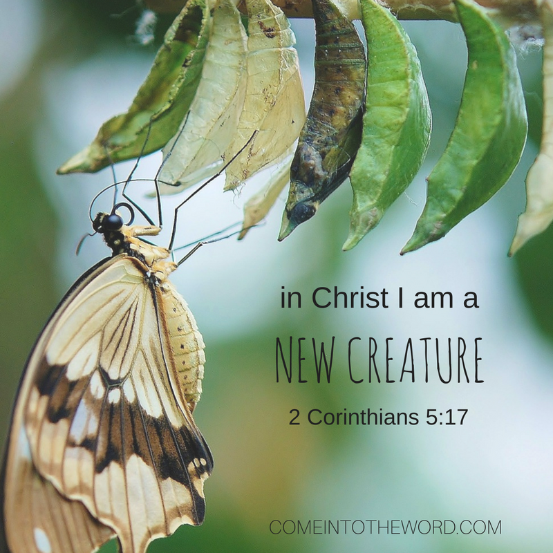 """""""In Christ I am a New Creature"""" - photo of Butterfly just hatched from a cocoon; changed"""