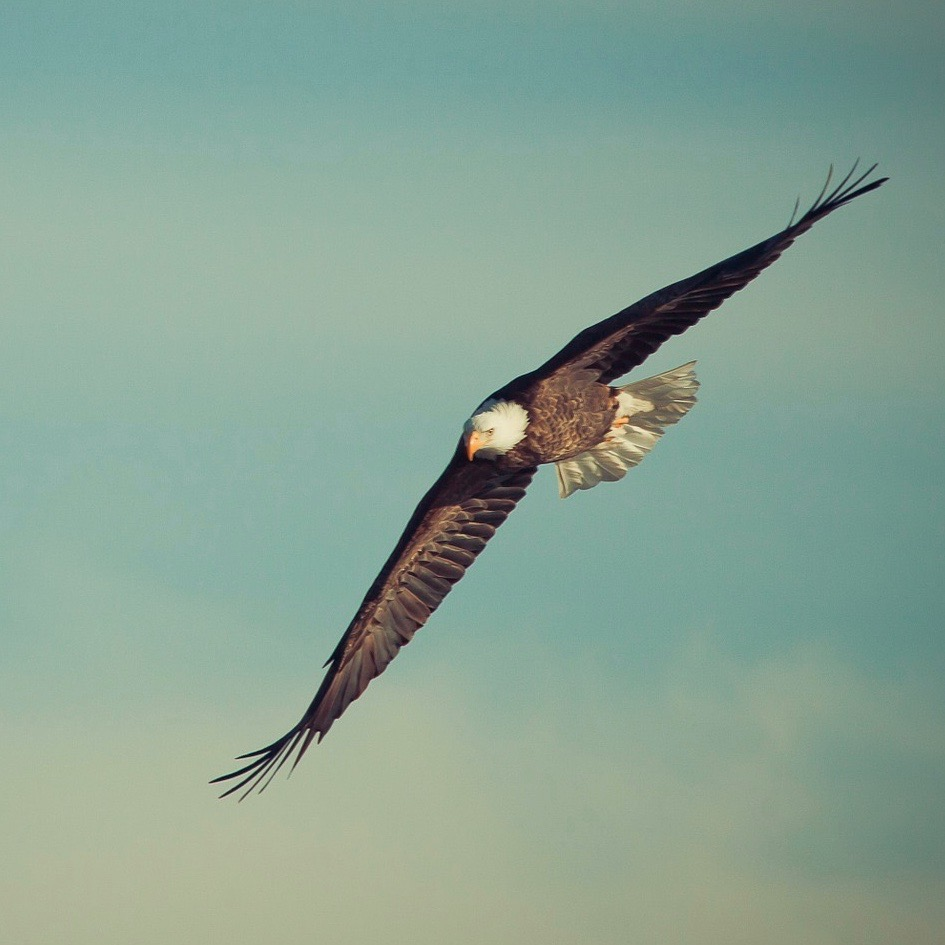 Eagle flying photo from Pixabay. CCO Creative Commoms license.